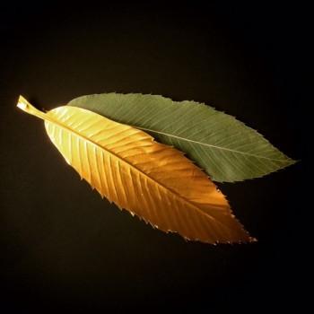 Blätter prägen