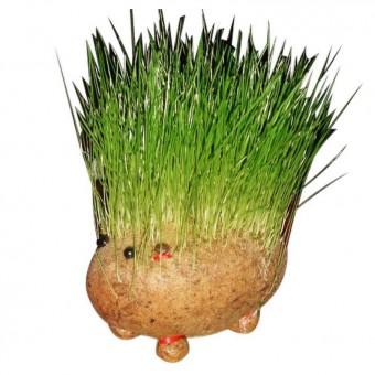 Gras-Tierchen